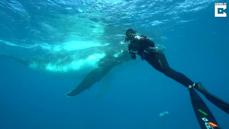 Австралийский дайвер сделал селфи с «танцующим» китом