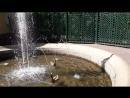Петергоф фонтан Фаворитный