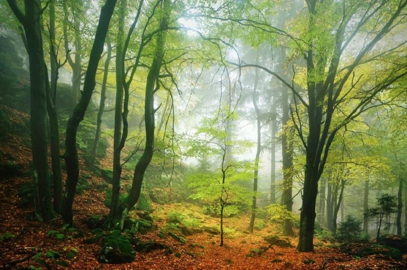 Леса Европы в фотоальбоме Килиана Шенбергера
