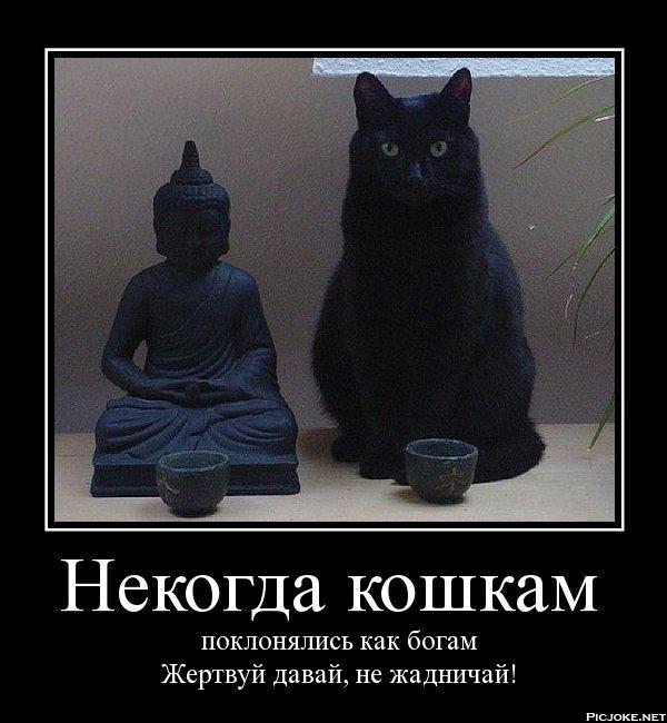 плексовый, картинка поклоняются кошкам цвет