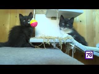 Рубрика Пора домой. Котята ищут дом. Программа Телекурьер