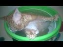 Кот помылся в ведре и там же уснул