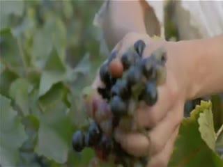 1001 рецепт влюбленного кулинара_эпизод с виноградом