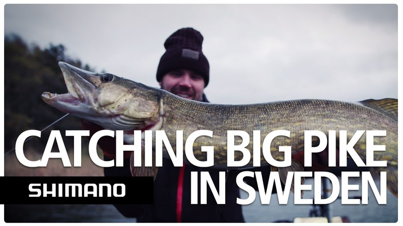 Catching big pike in Sweden YASEI Pike fishing Sweden