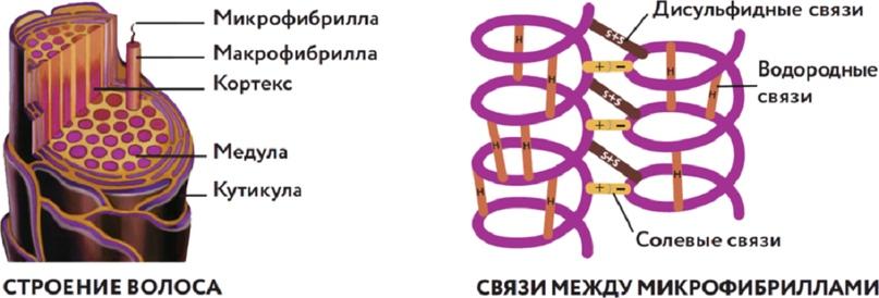 Принцип действия Специального мелирования с крем-краской для волос с гиалуроновой кислотой, от Kapous, изображение №2