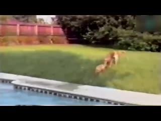 Взаимовыручка у животных