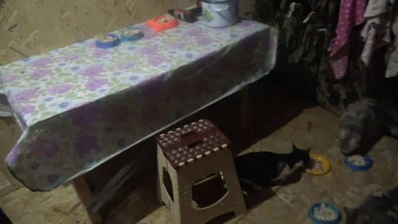 Gerettete Katzen aus Sotschi