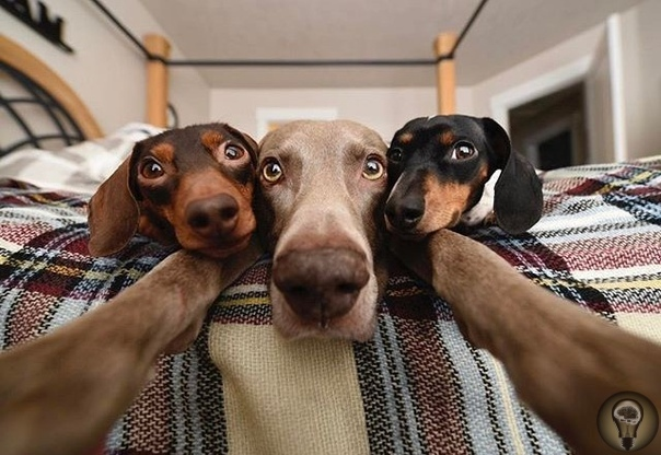 Домашние питомцы. Собаки -улыбаки.