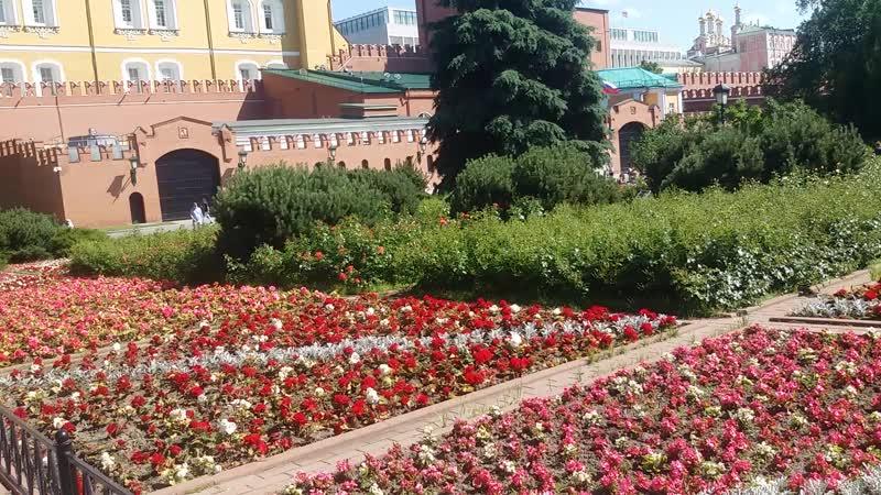 Цветы Александровского сада 2020