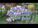 02 08 17г Гортензия сорта Вечное лето в полной красе