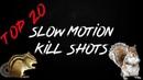 Top 20 Pest Control Kills with the EDgun Leshiy and ATN X Sight 4K Pro