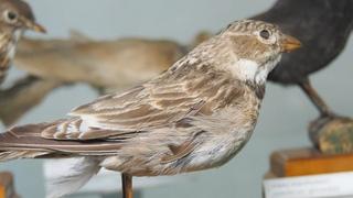 """Выставка """"Весна на крыльях"""" в честь Международного дня птиц."""