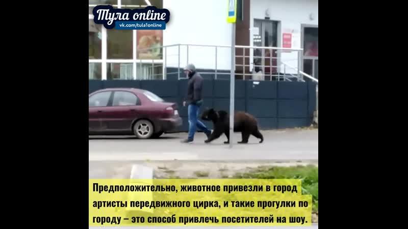 Медведь разгуливает по Венёву