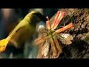 BBC Дикий Мир Будущего 100 миллионов лет спустя / 2 серия