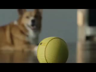 Домашний робот-компаньон Ballie от Samsung