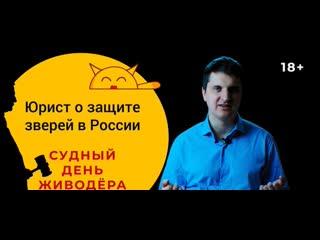 Час Суда Над Живодерами- КОГДА УЖЕ Юрист О Защите Животных В России