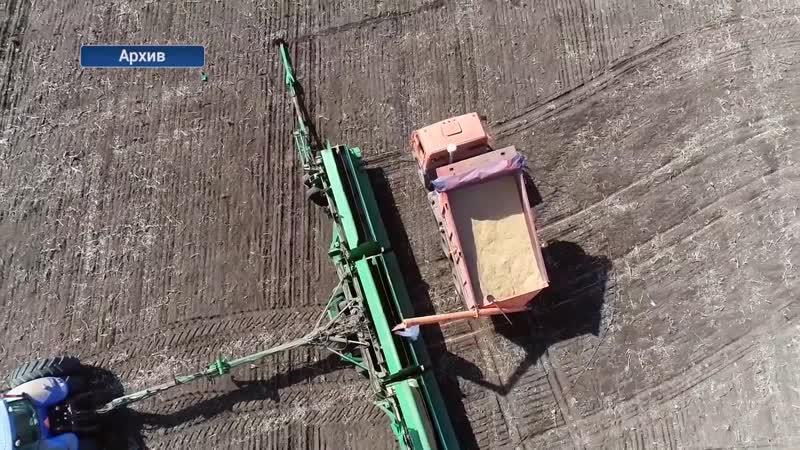 В ДНР перевыполнен план по севу ранних и поздних яровых зерновых культур