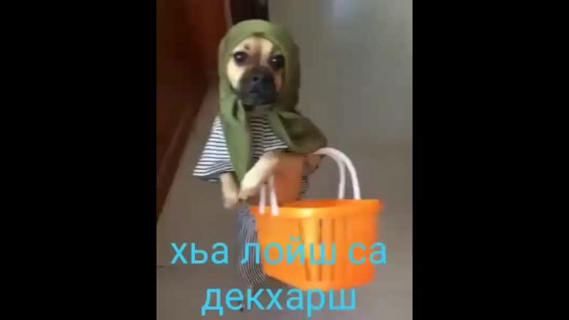 Mebelniy_salon_luxB39r-pNI5zI.mp4
