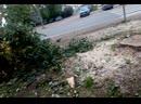 после аварии срубили деревья