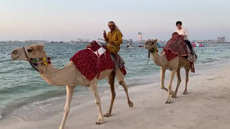 Верблюды Прямо на пляже 🤪 луномосик верблюды красиво пляж закат море кайф