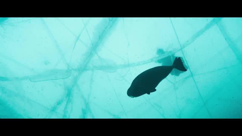 Байкал. Магия воды — Трейлер (2019)