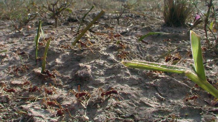 BBC Жизнь 10 серий из 10 Life 2009 Серия 06 Насекомые Insects