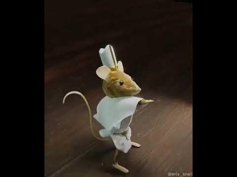 Мышь флексит пол дориме амено (TIKTOK)