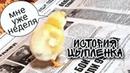 История цыпленка 1 неделя цыпе