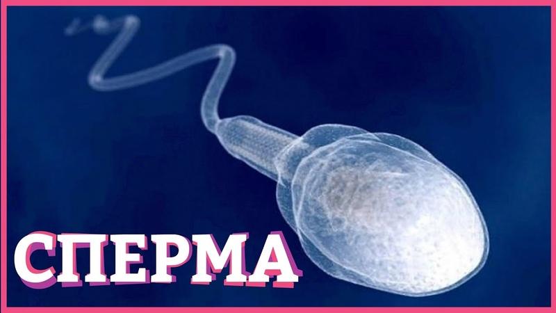 ФАКТЫ ПРО СПЕРМУ Вредна ли сперма глотать или не глотать Secrets Center