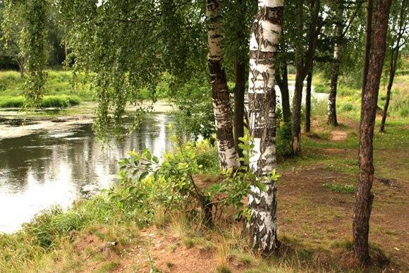 фон для фото речка лес березы кое-какие дела