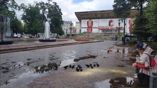 Москвичи вышли кормить голубей в поддержку Хабаровска / LIVE 01.08.20