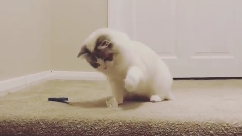 So Cute Cats Kittens Baby Cat Playing and Funny Moment Video CatsKittens 41