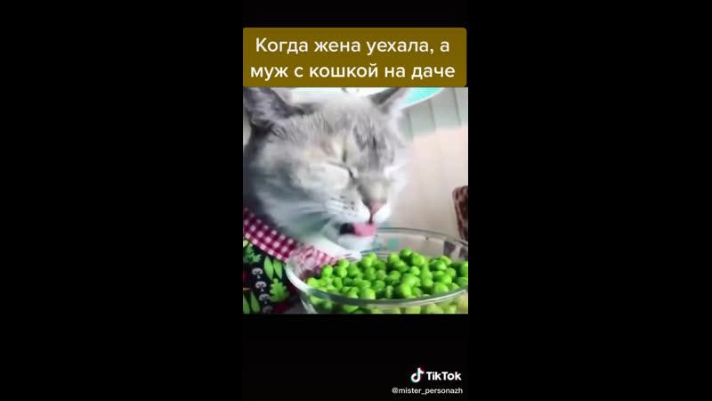 Котик любит кушать всё