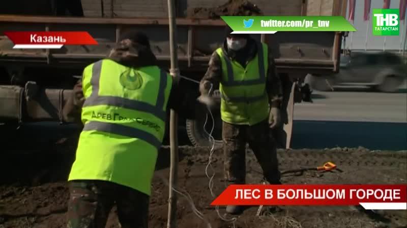 В Казани идёт Зелёная реконструкция восемь тысяч саженцев расцветут в столице ТНВ