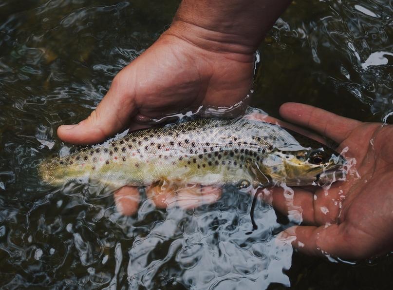 Исследование показало, что пойманная на крючок, а затем выпущенная рыба больше не может нормально питаться, изображение №2