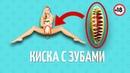 КИСКА С ЗУБАМИ / Анекдот Дня / Смешно до слез
