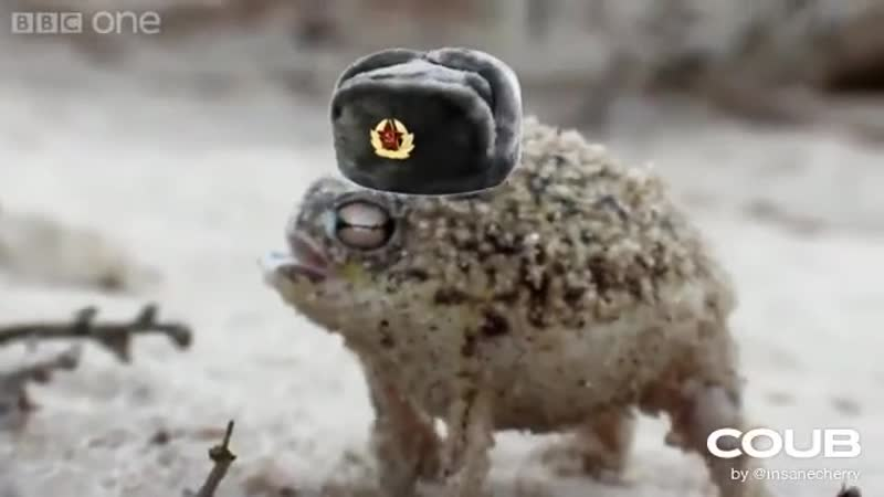 Angry Squeaking Gopnik