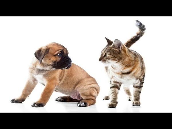 Awesome Funny Pet Animals' Life Video Funniest 😻 Cats and 🐶 Dogs Try not to laugh 🤣