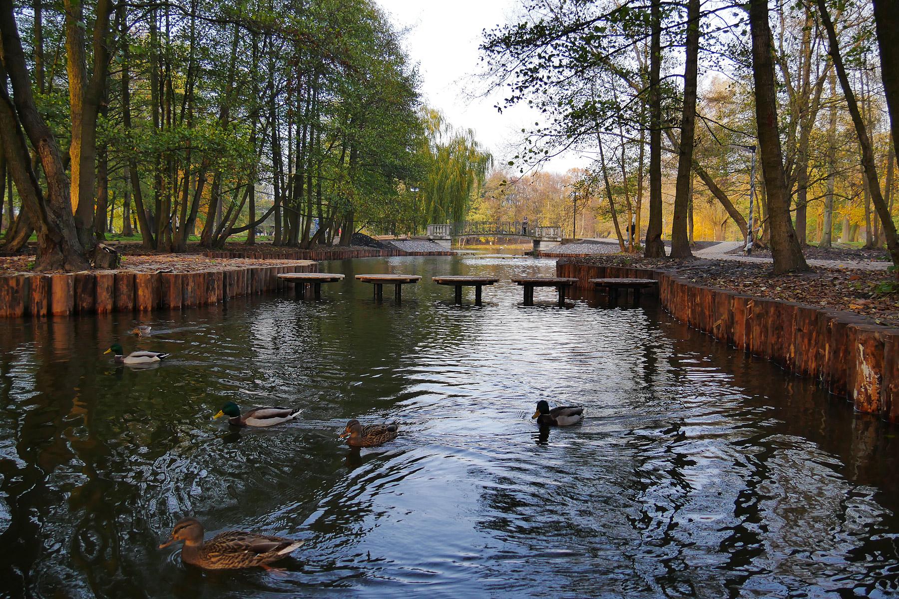Зеленоградский парк 8 ноября