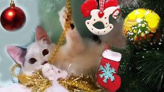 Котенок Мурка и Новый год или Реакция Кота на Ёлку и Игрушки