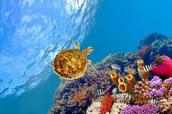 Обои На Рабочий Стол Подводный Мир
