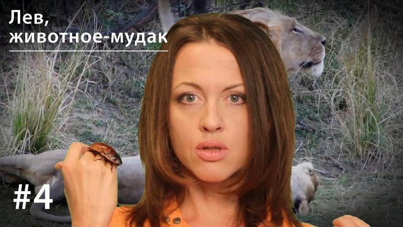 Лев животное мудак Всё как у зверей 4