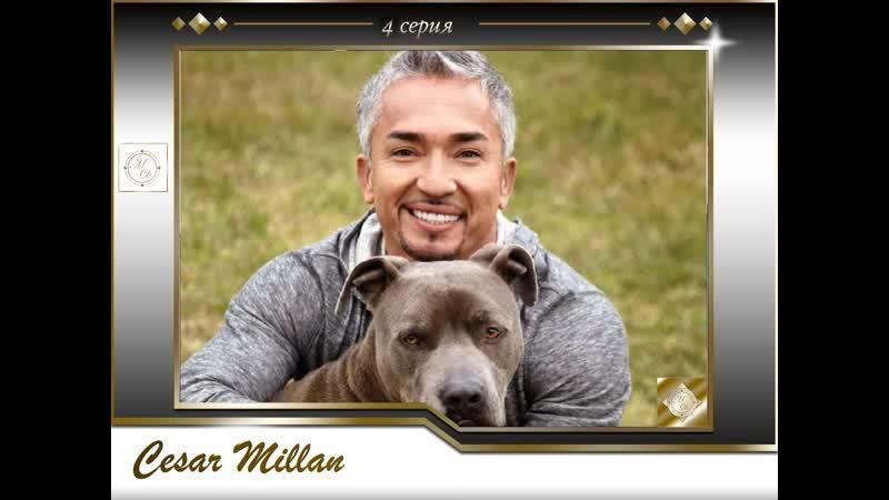 4 серия Сезар Миллан Переводчик с собачьего Pepper Slick