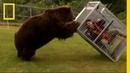 Brown Bear Attack Dangerous Encounters Alaska's Bear Country and Beyond