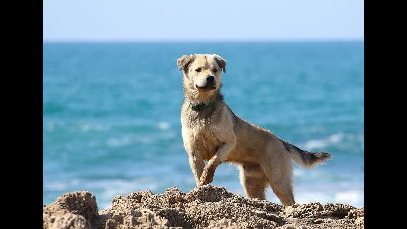 Дай лапу мне на счастье друг Ф Кнорре Солёный пёс