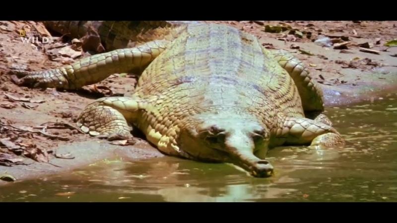Затерянные миры Индии Охотники Нагаленда Документальный фильм National Geographic