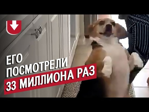 Видео с этим псом посмотрели 33 миллиона раз!