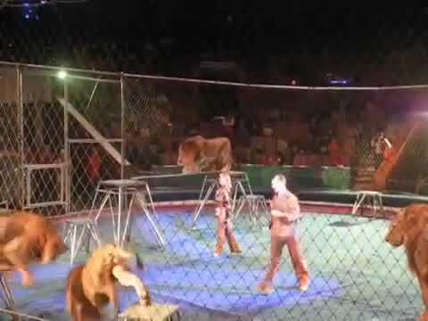 В цирке львы и тигры напали на человека