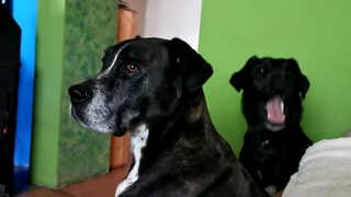 Meet my DOGS and CATS ~ 5 minutes of my life ~ Introducing Nera, Flora and Inty ~ Cute dog and cat