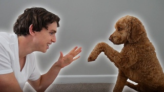 I Taught My Dog to Play Rock, Paper, Scissors